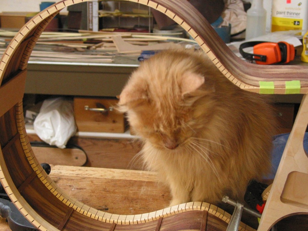 The rim assembly. My cat looks over the quality of the workmanship and gives it his approval.